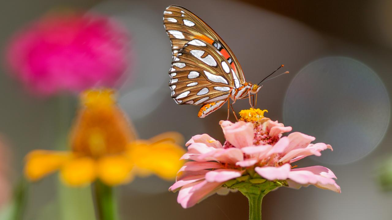 No matter the size of your garden, it can be a magnet for attracting butterflies, hummingbirds, and other creatures. Smart garden tech can free up time so you can enjoy nature's show. Image: Digitized House Media.